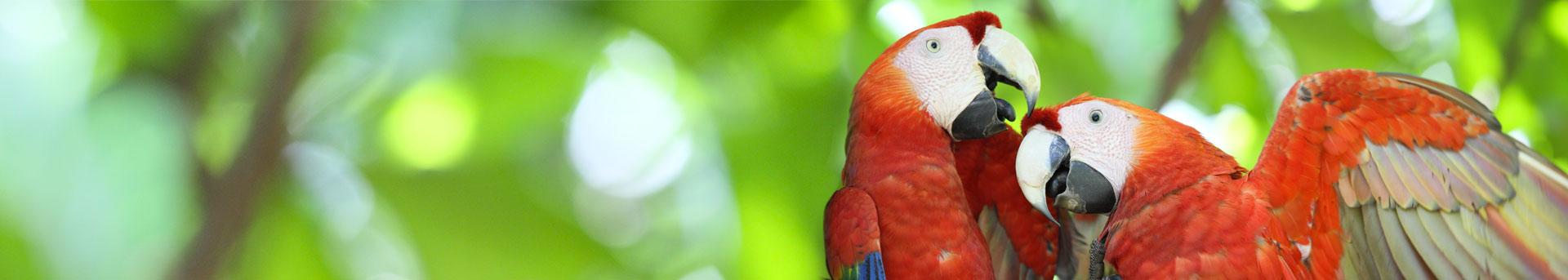 Conozca bellezas naturales. Lapa Roja