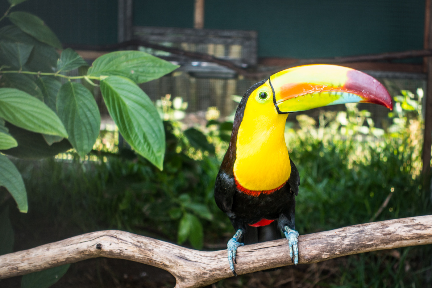 toucan rescue ranch costa rica 5
